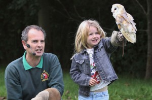 Barn Owl encounter Paradise Park Cornwall