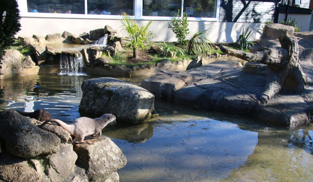 Otter Pool next to Cafe