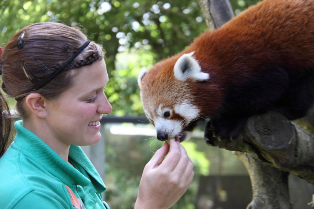Red Panda Training