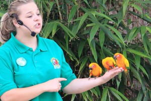 Free Flying Bird Show