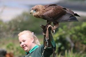 Angelo the Bateleur Eagle