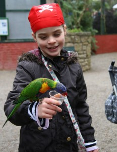 Meet the Parrots at Pirates and Fairies Half Term Week
