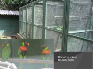 Mitchell Lorikeets -  Breeding Facility at Begawan Foundation