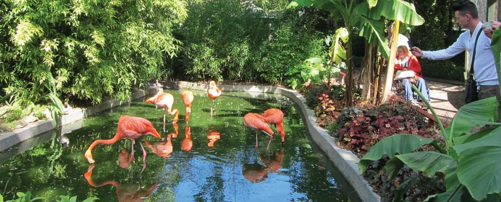 Flamingos at Paradise Park