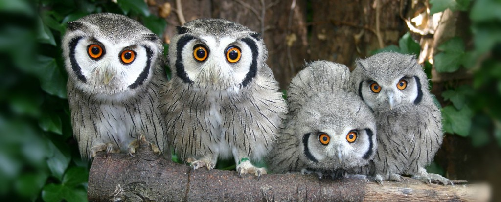 Owls at Paradise Park