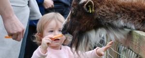 Carrot Time in the Fun Farm