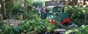 Jungle Express Train