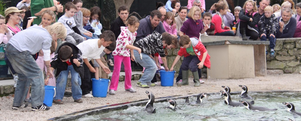 Penguin Feeding