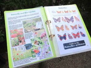 Butterfly and Bee Garden info