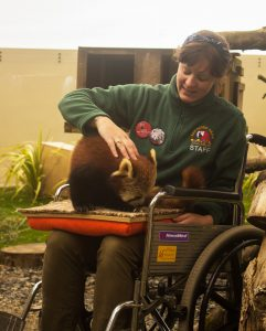 Red Panda Experience for wheelchair uses