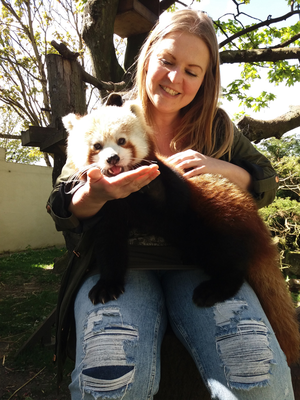 Shannon Workman Red Panda Experience
