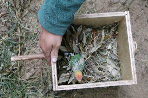 Lilians Lovebird nestbox