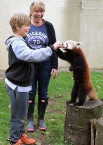 Alex feeding a Red Panda