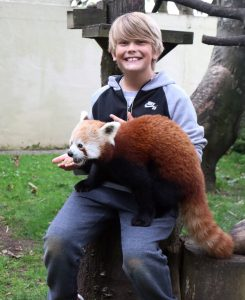 Red Panda sitting on Alex's lap