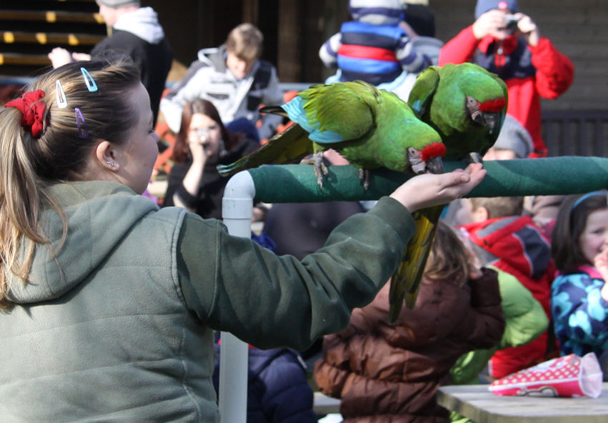 Flying Macaws February Half Term
