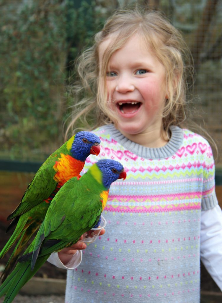 Olive with lorikeets at Paradise Park Cornwall