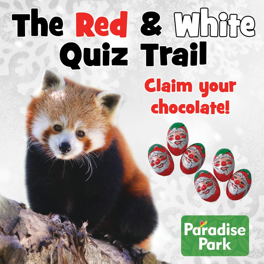 Red and White Quiz