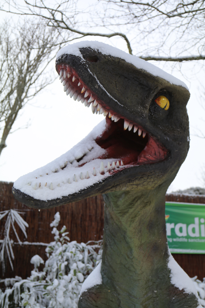 Snow is no laughing matter! Paradise Park.