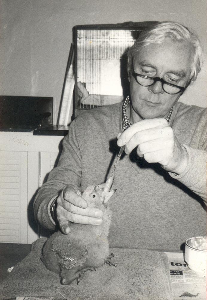 Mike Reynolds hand rearing Keas