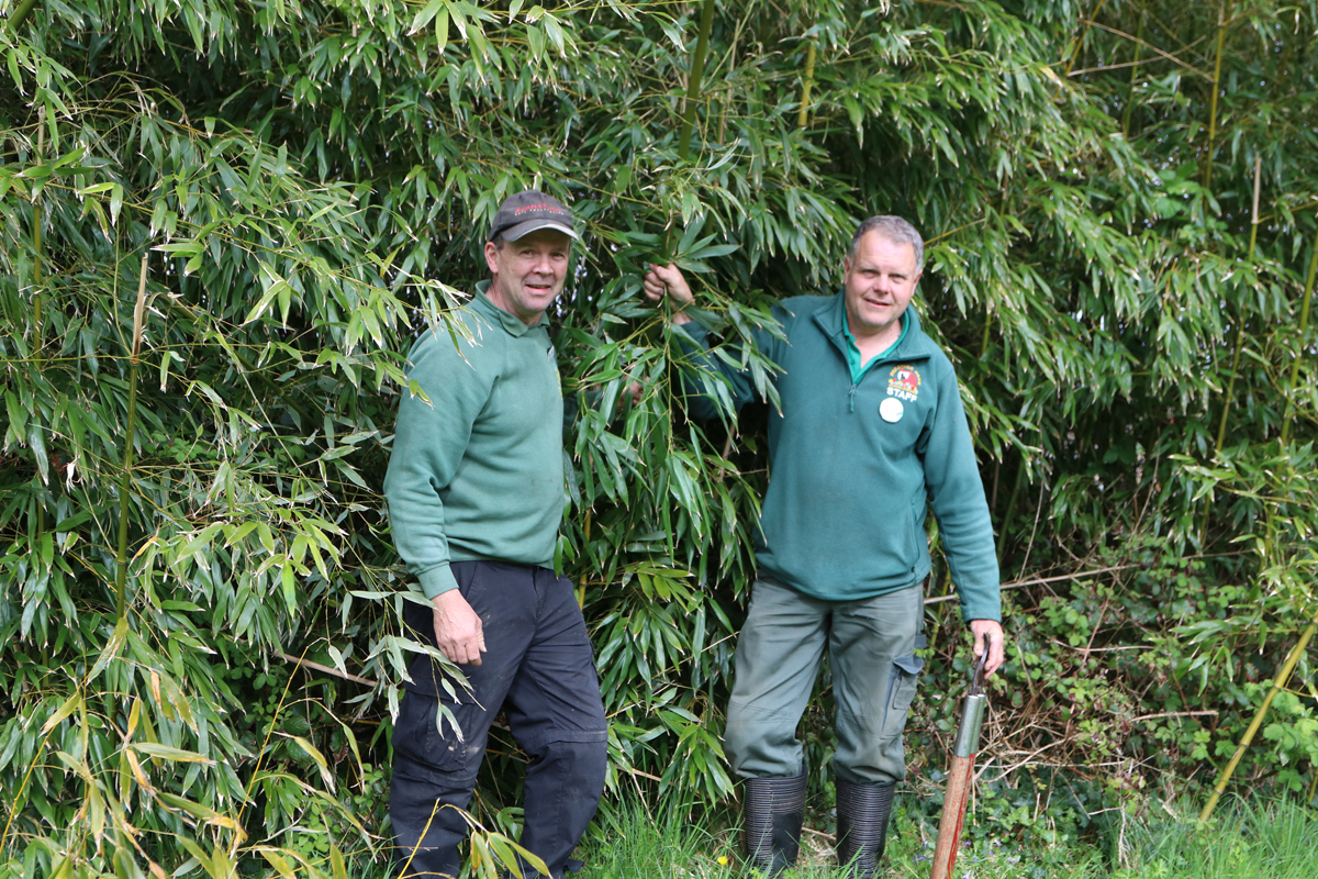 John and Mike at Trevena Cross collecting Bamboo