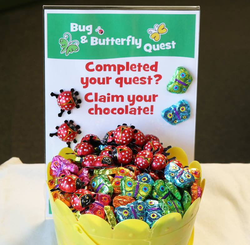 Bug and Butterfly Chocolates