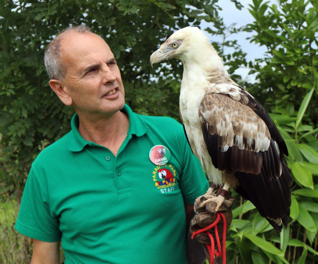 David Woolcock & Tangee the Palm-nut Vulture
