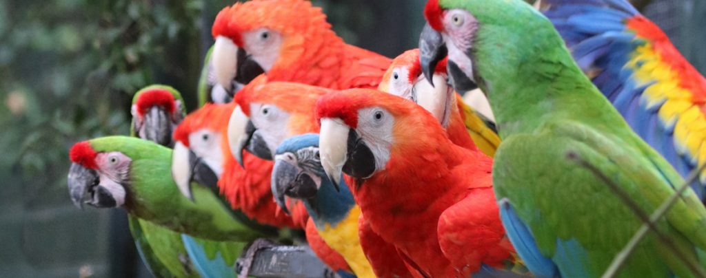 Macaw Header Image