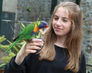 New Lorikeet encounter