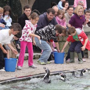 Penguin Feeding Paradise Park