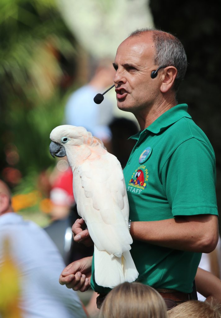 David with Ollie a Moluccan Cockatoo