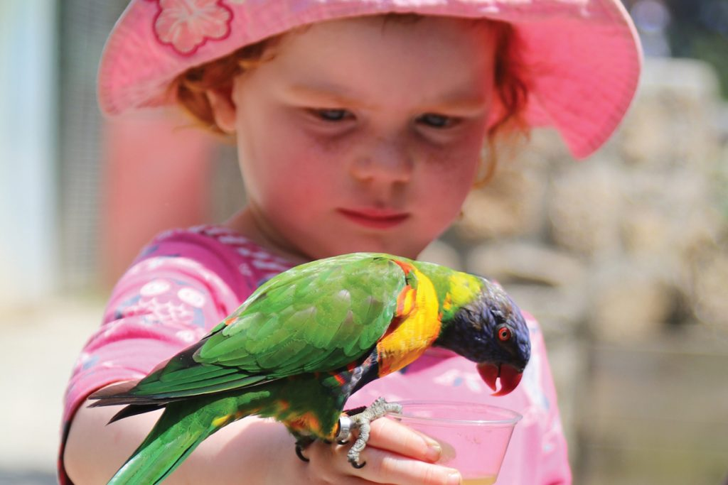 Lorikeet feeding at Paradise Park Cornwall