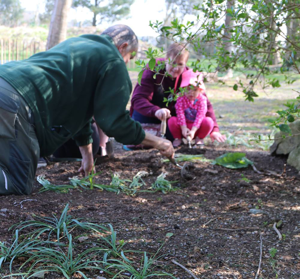 Snowdop Planting at Paradise Park in Hayle