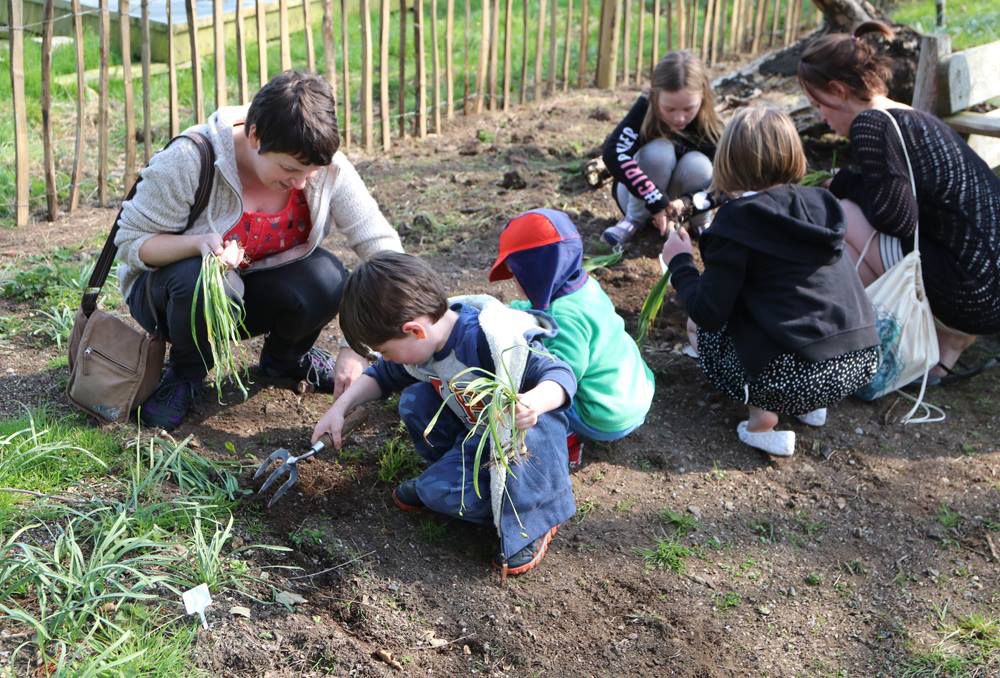 Snowdrop planting at Paradise Park