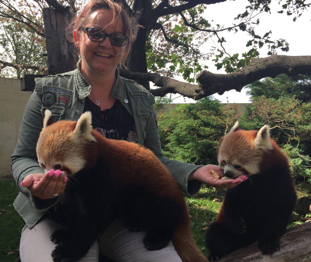 Sima Ballard Red Panda Experience