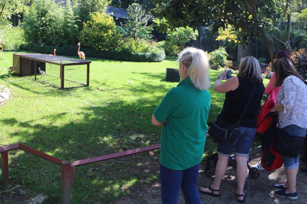 Day 25 Visitors in walled garden - Derek