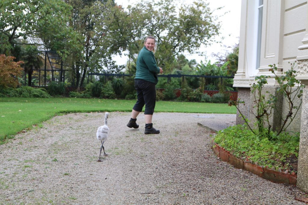 Day 35 Derek Following Danni at Paradise Park in Cornwall