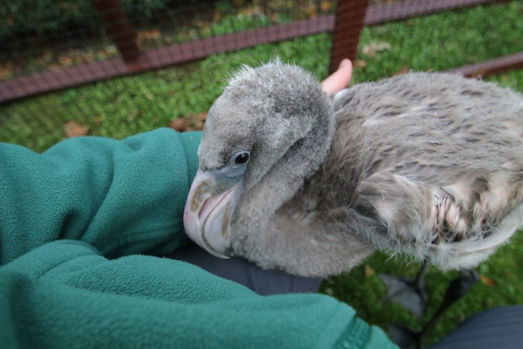 Day 61 Derek still likes to come up close for a cuddle