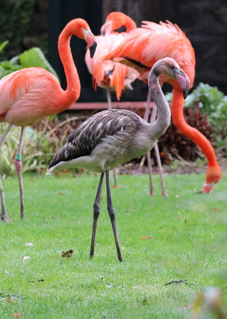 Derek Day 119 with the main flamingo flock