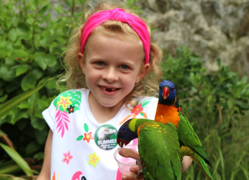 Summer feeding the lorikeets at Paradise Park Hayle Cornwall