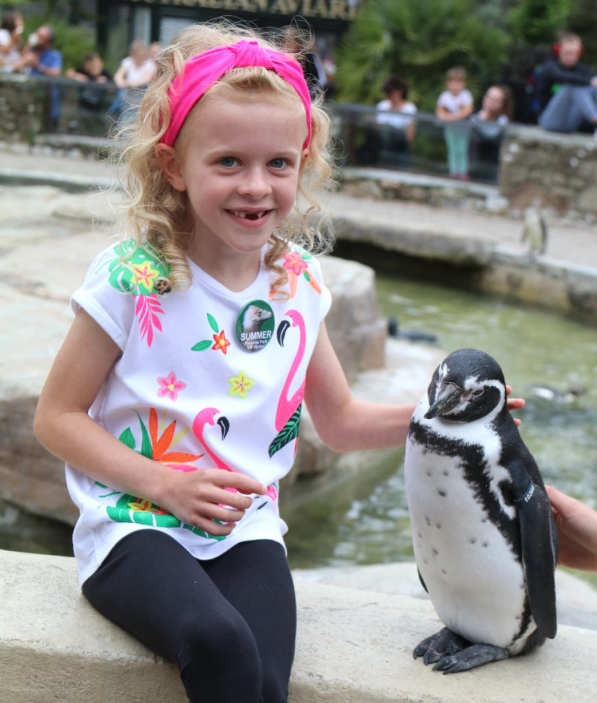 Summer with Houdini the Humboldt''s penguin at Paradise Park
