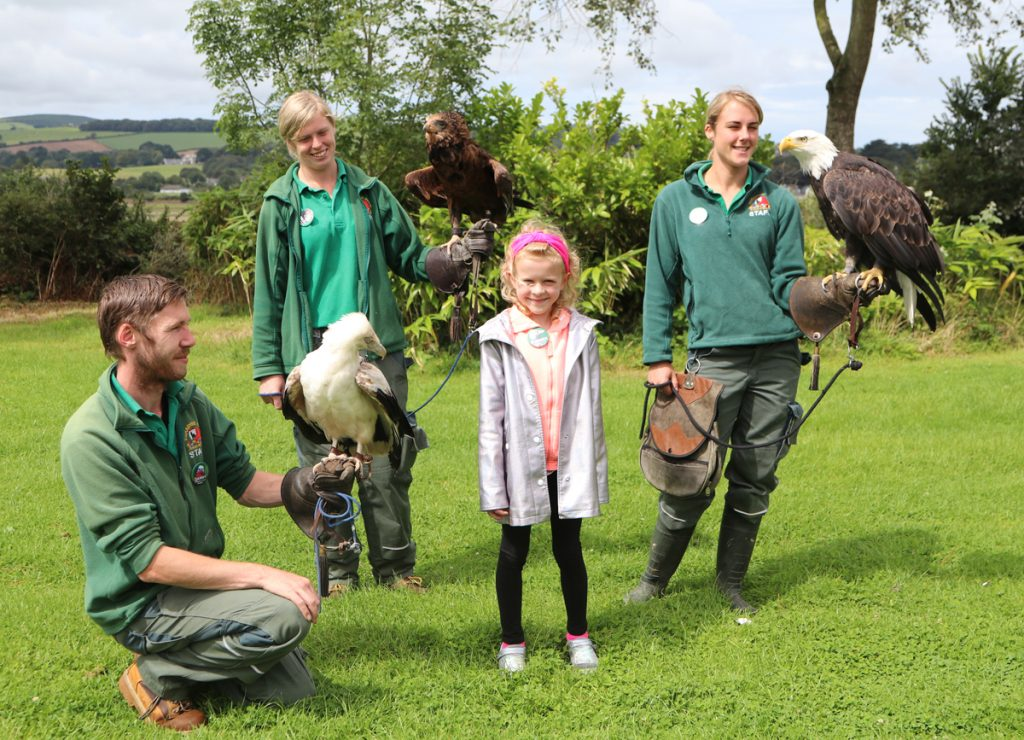 Summer with keepers and the birds of prey at Paradise Park