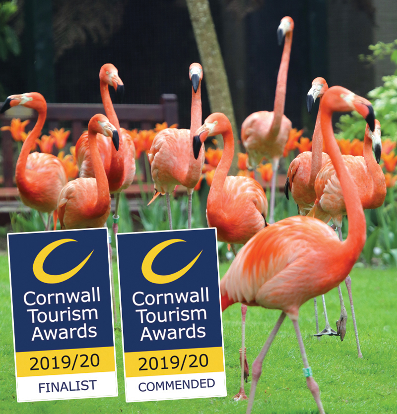 Flamingos and CTA Awards 2019 2020