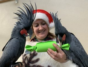 Leanne and Palm Cockatoos with Enrichment