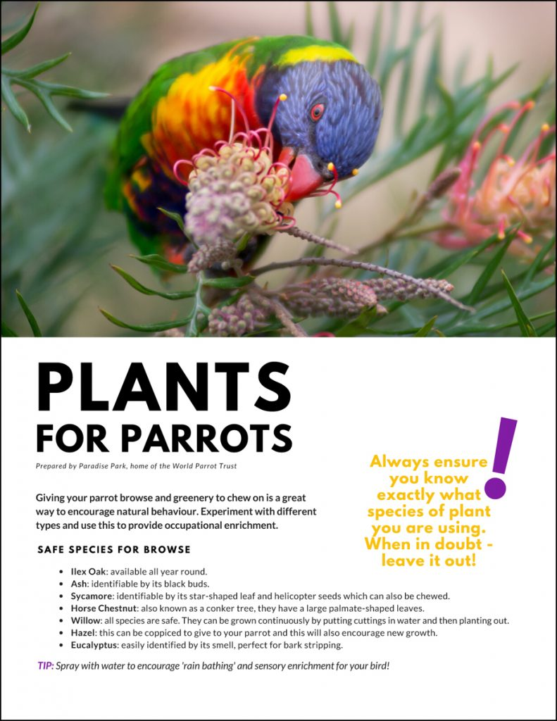 Plants for Parrots foraging article