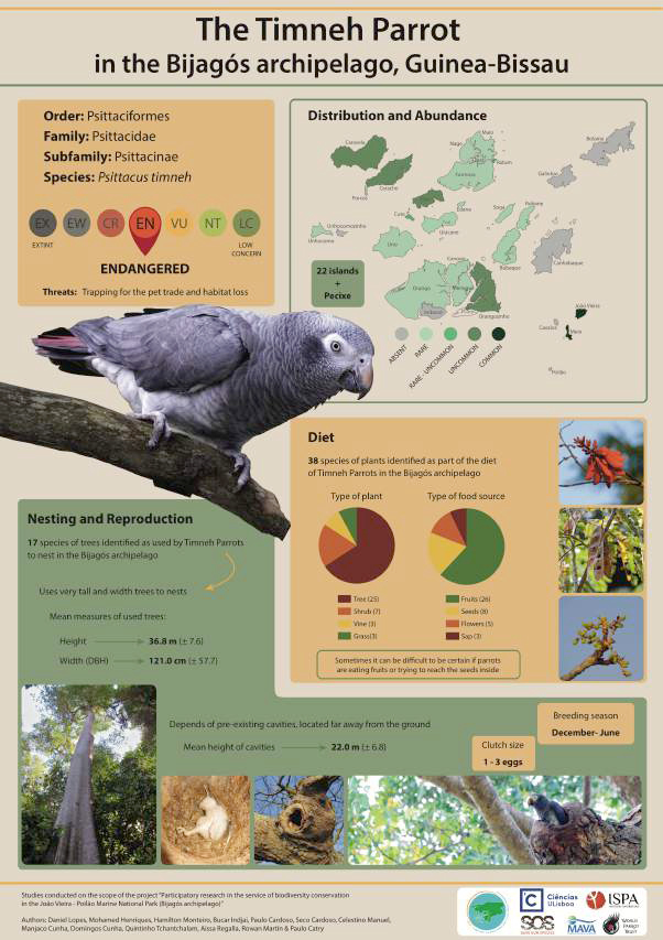 The Timneh Parrot Poster