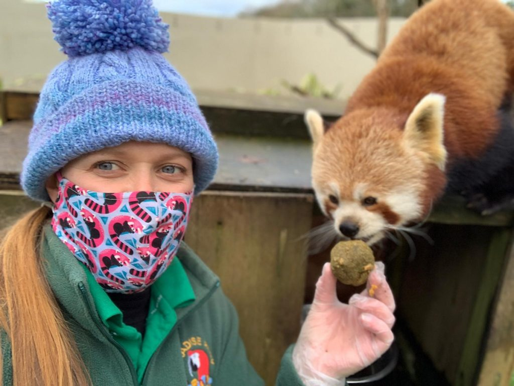 Keeper Donna feeding Red Panda