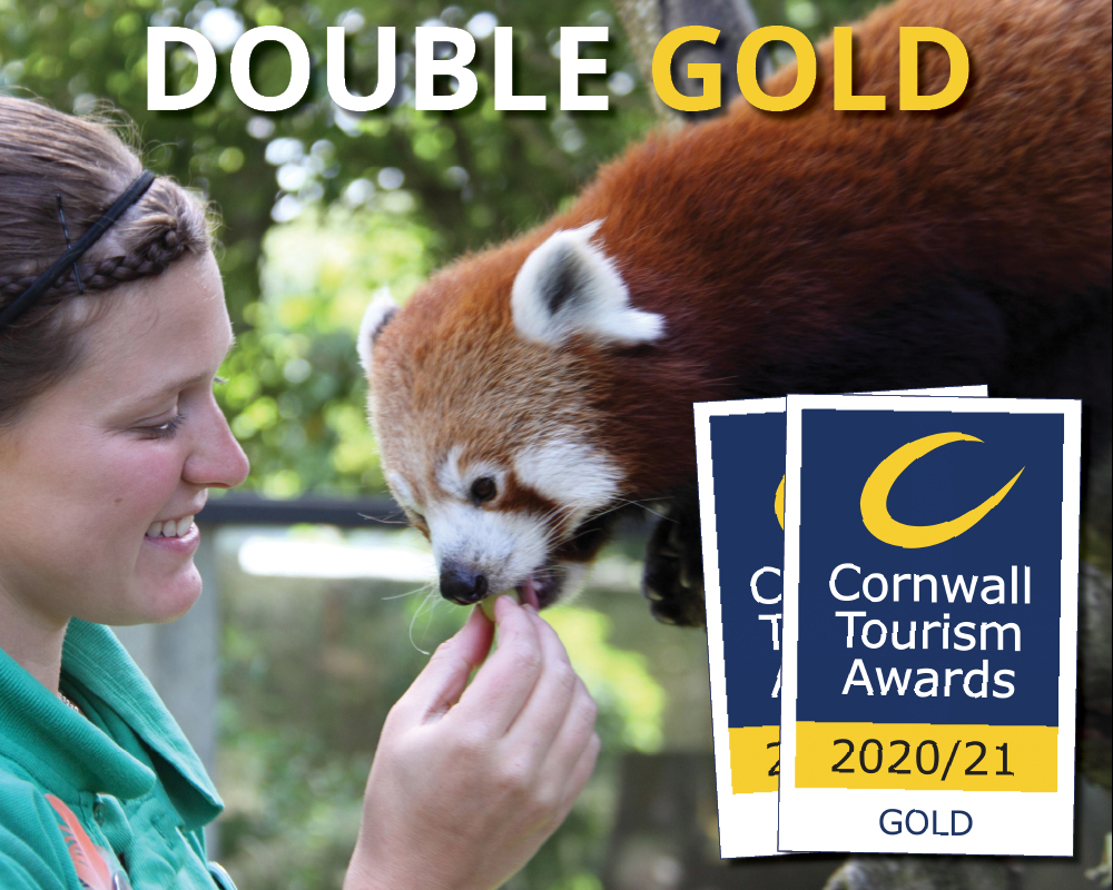 DOUBLE GOLD in the 2020 2021 Cornwall Tourism Awards